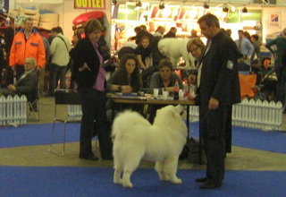 21.11.2010. CACIB Zagreb