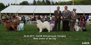 CACIB Szilvasvarad 24.04.2011.
