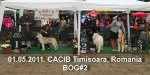 CACIB Timisoara 01.05.2011.